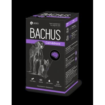 BACHUS Calm&Brave, N60